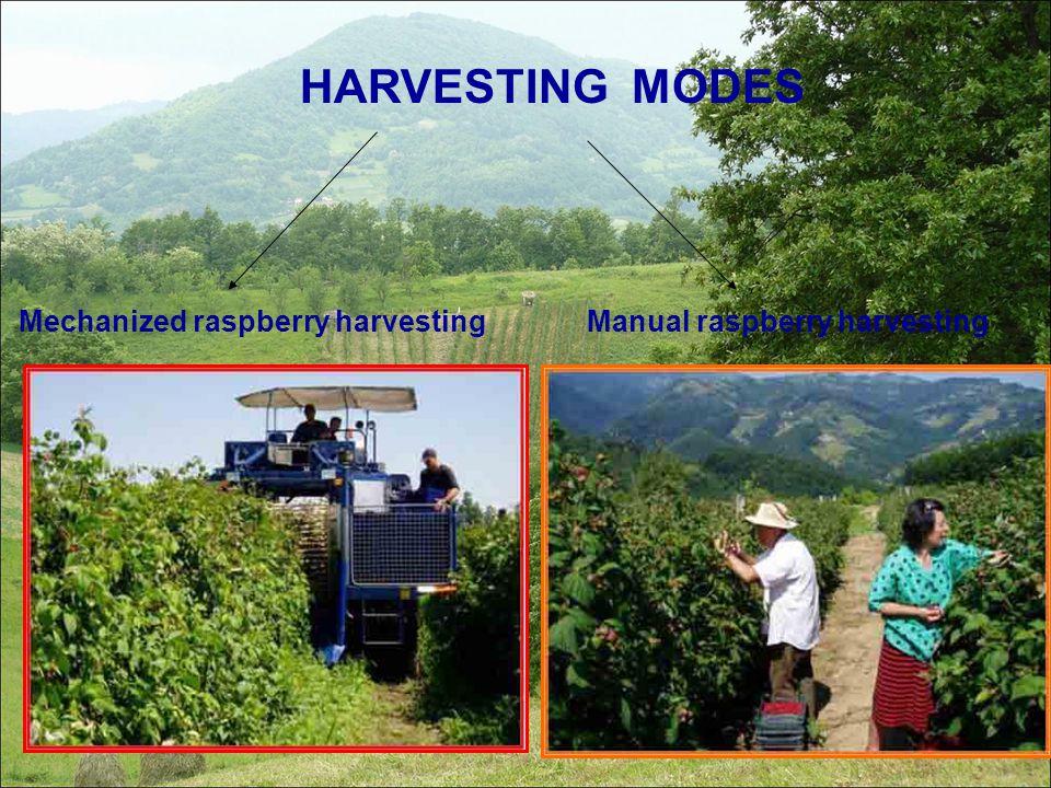 HARVESTING MODES Manual raspberry harvesting Mechanized raspberry harvesting