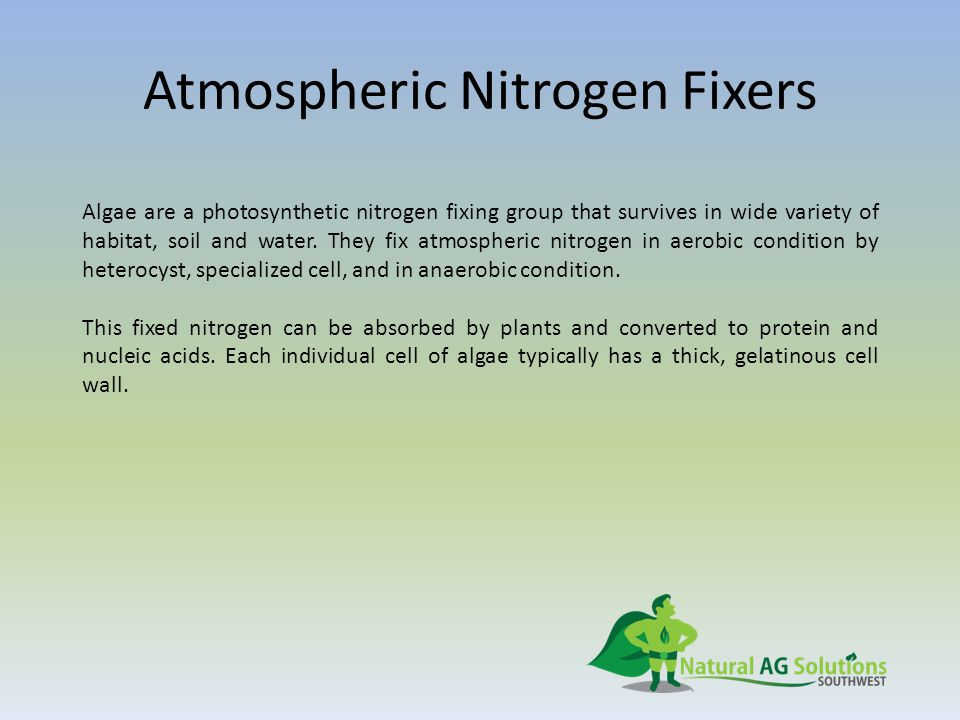 Atmospheric Nitrogen Fixers Algae are a photosynthetic nitrogen fixing group that survives in wide variety of habitat, soil and water.