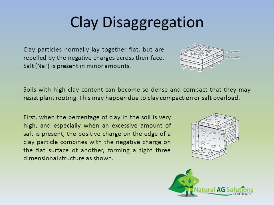 Clay Disaggregation Clay particles normally lay together flat, but are repelled by the negative charges across their face. Salt (Na + ) is present in