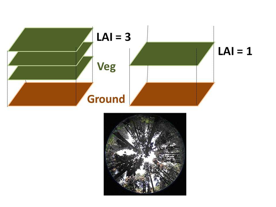 Ground Veg