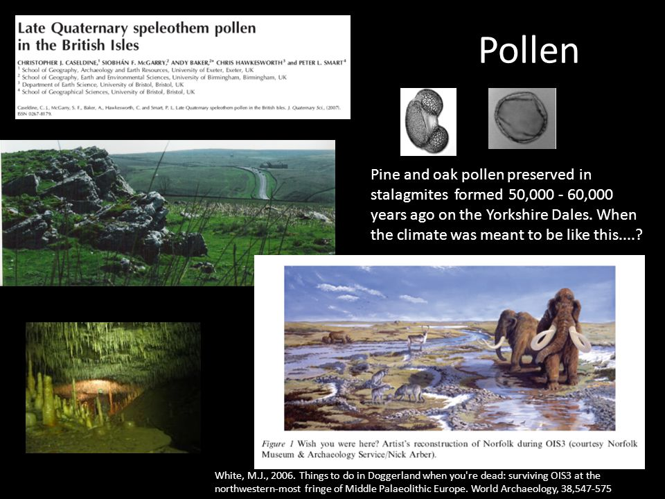 Pollen Pine and oak pollen preserved in stalagmites formed 50,000 - 60,000 years ago on the Yorkshire Dales.