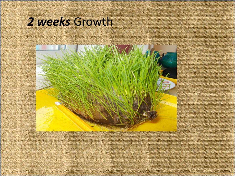 2 weeks Growth