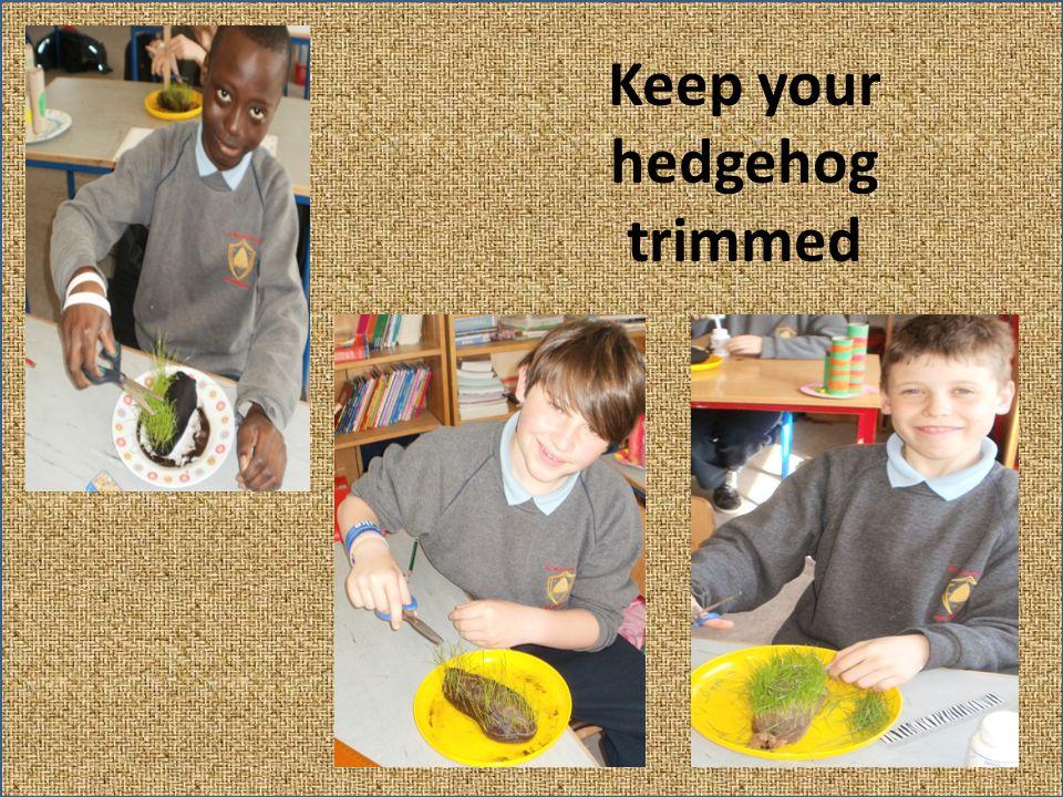 Keep your hedgehog trimmed