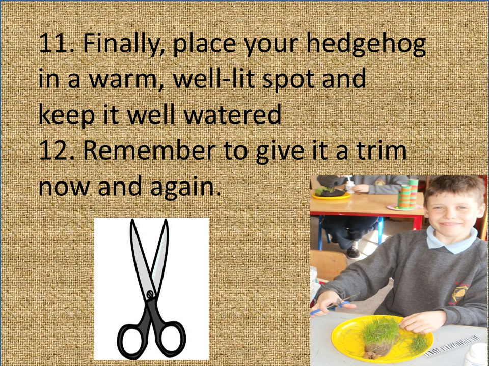 11. Finally, place your hedgehog in a warm, well-lit spot and keep it well watered 12. Remember to give it a trim now and again.