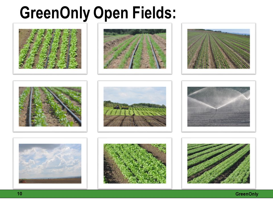 GreenOnly 10 GreenOnly Open Fields: