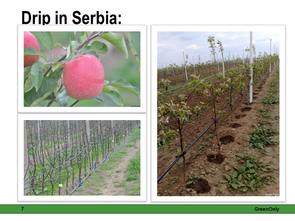 GreenOnly 7 Drip in Serbia: