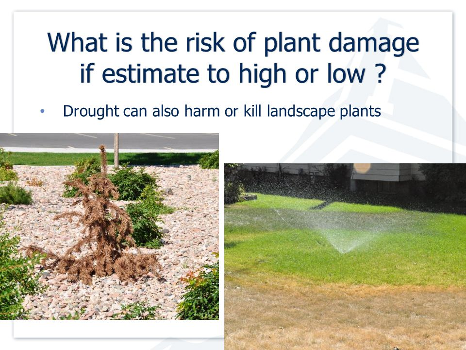 What is the risk of plant damage if estimate to high or low .