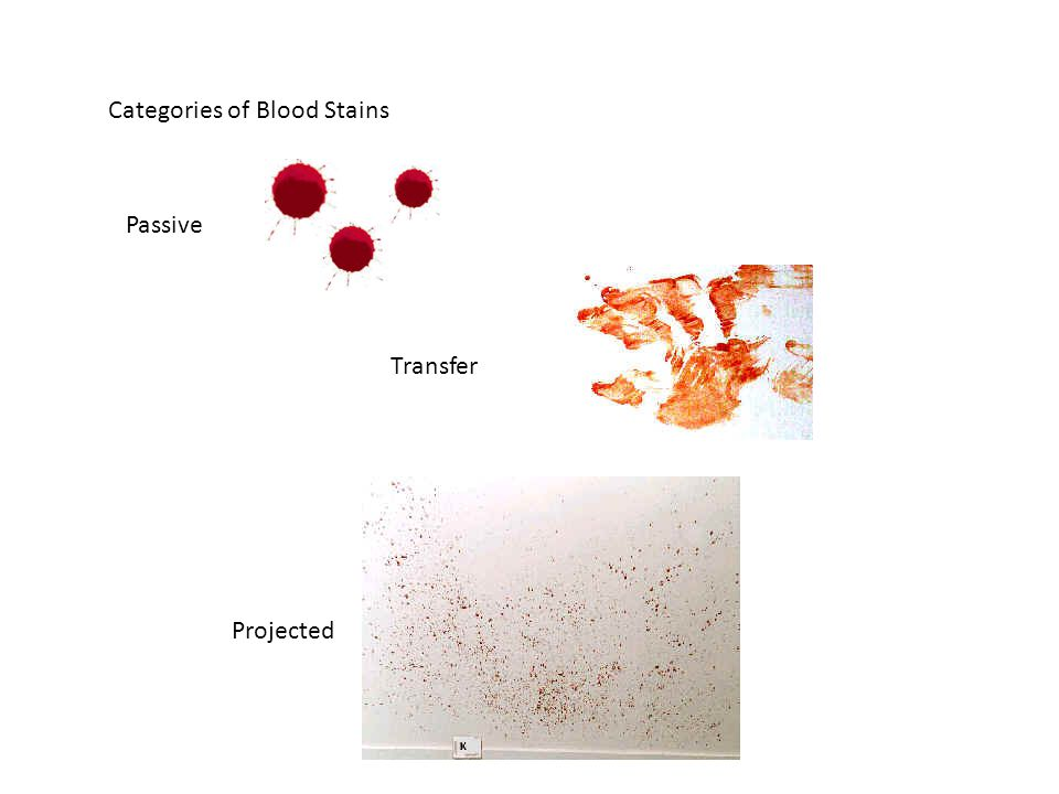 Projected Transfer Passive Categories of Blood Stains