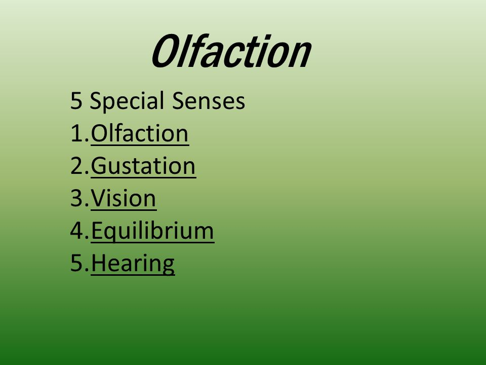 Olfaction – the sense of smell Our sense of smell does not compare to with dogs, cats, or fish Provided by paired olfactory organs Organs are located in the nasal cavity on either side of the nasal septum Olfaction