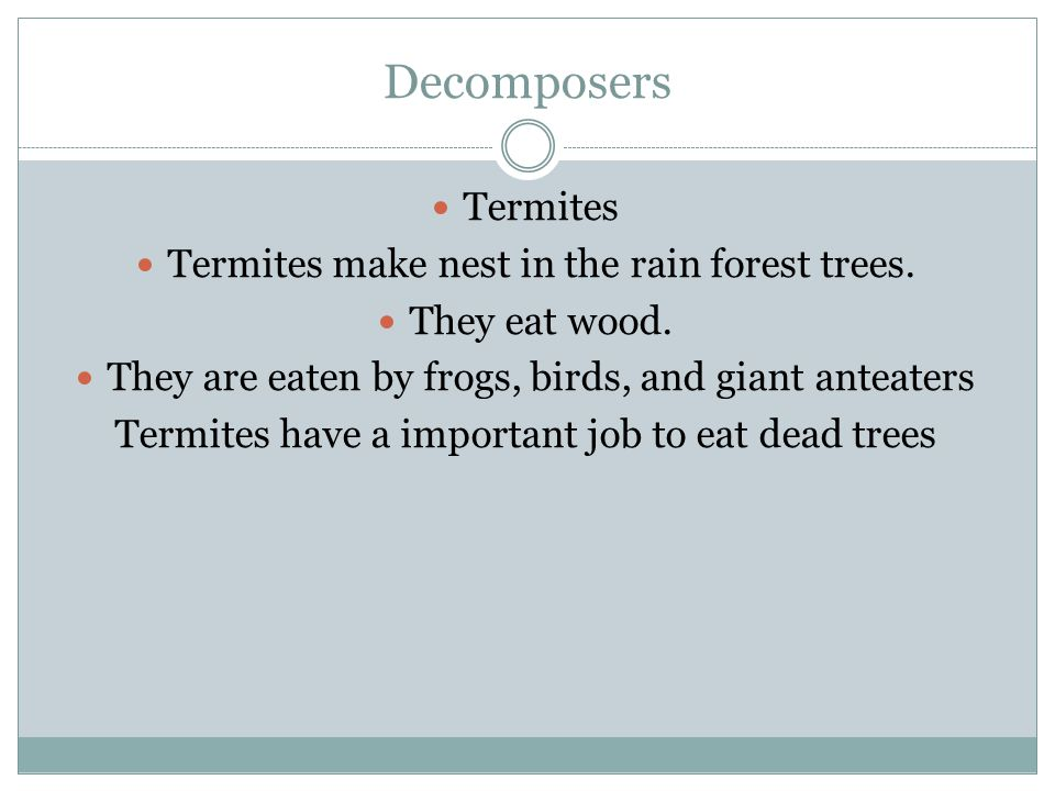 Decomposers Termites Termites make nest in the rain forest trees. They eat wood. They are eaten by frogs, birds, and giant anteaters Termites have a i
