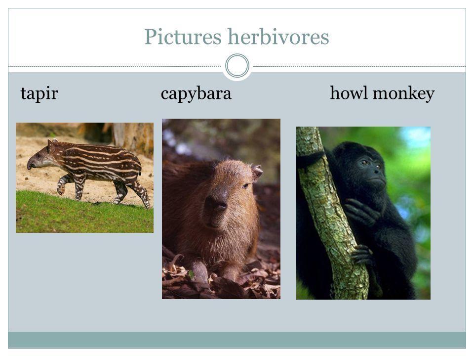 Pictures herbivores tapir capybara howl monkey