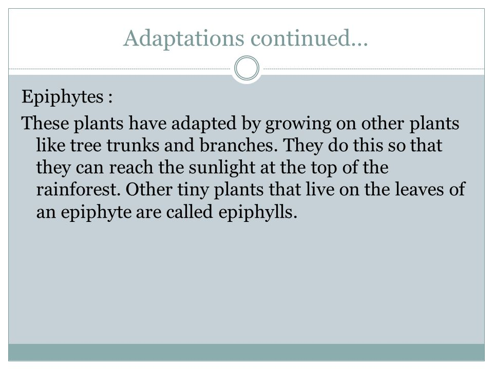 Adaptations continued… Epiphytes : These plants have adapted by growing on other plants like tree trunks and branches. They do this so that they can r