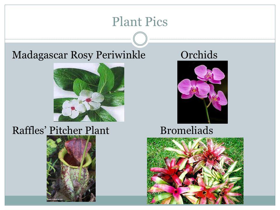 Plant Pics Madagascar Rosy Periwinkle Orchids Raffles' Pitcher Plant Bromeliads