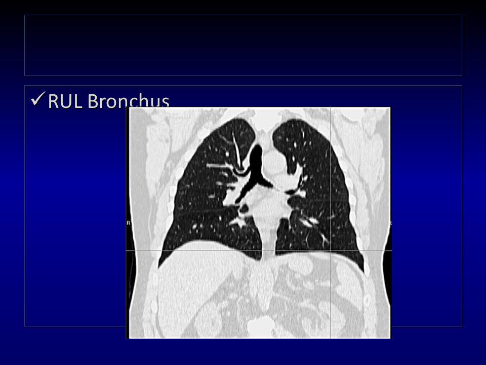 RUL Bronchus