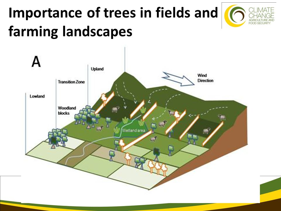 Importance of trees in fields and farming landscapes