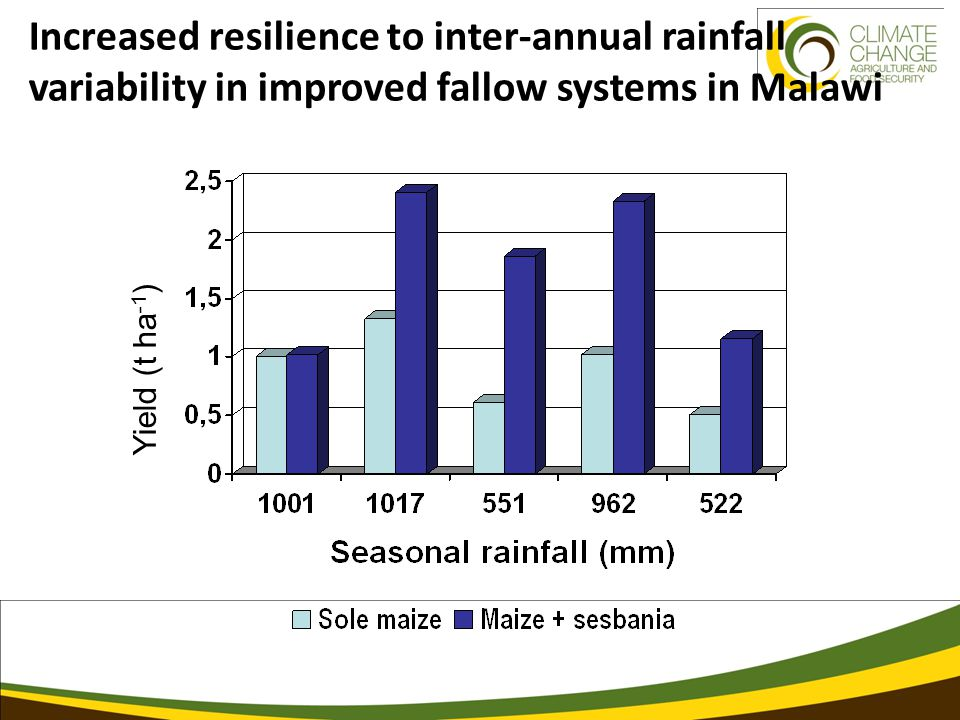 Yield (t ha -1 ) Increased resilience to inter-annual rainfall variability in improved fallow systems in Malawi
