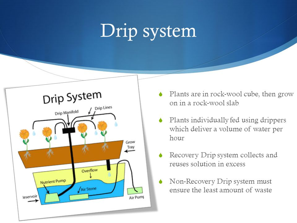 Drip system  Plants are in rock-wool cube, then grow on in a rock-wool slab  Plants individually fed using drippers which deliver a volume of water per hour  Recovery Drip system collects and reuses solution in excess  Non-Recovery Drip system must ensure the least amount of waste