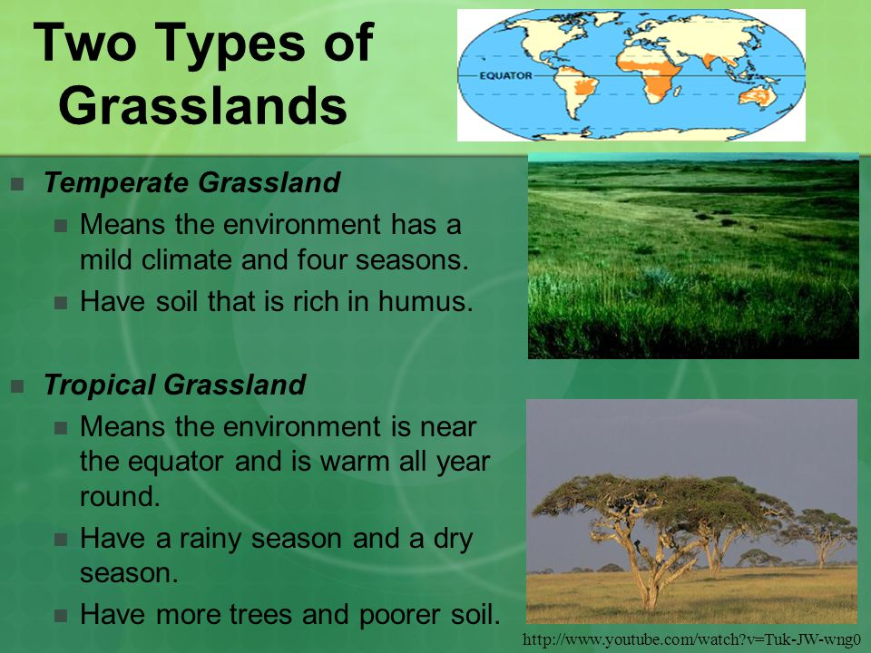 Two Types of Grasslands Temperate Grassland Means the environment has a mild climate and four seasons.