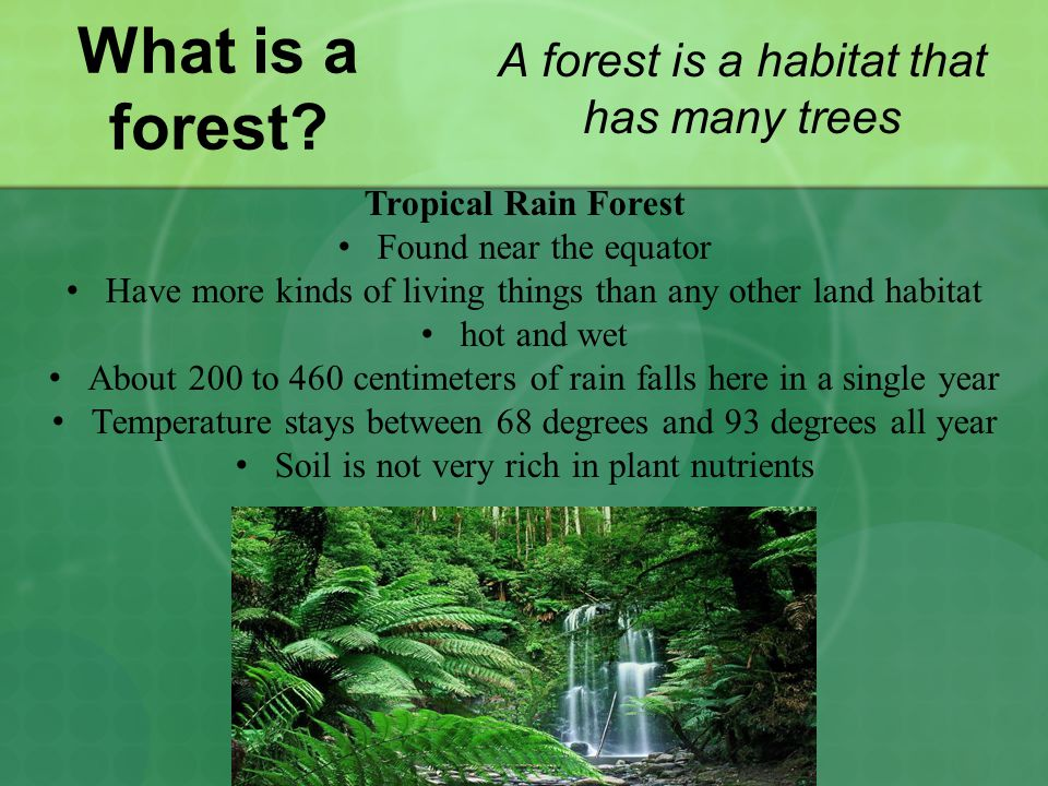 What is a forest.