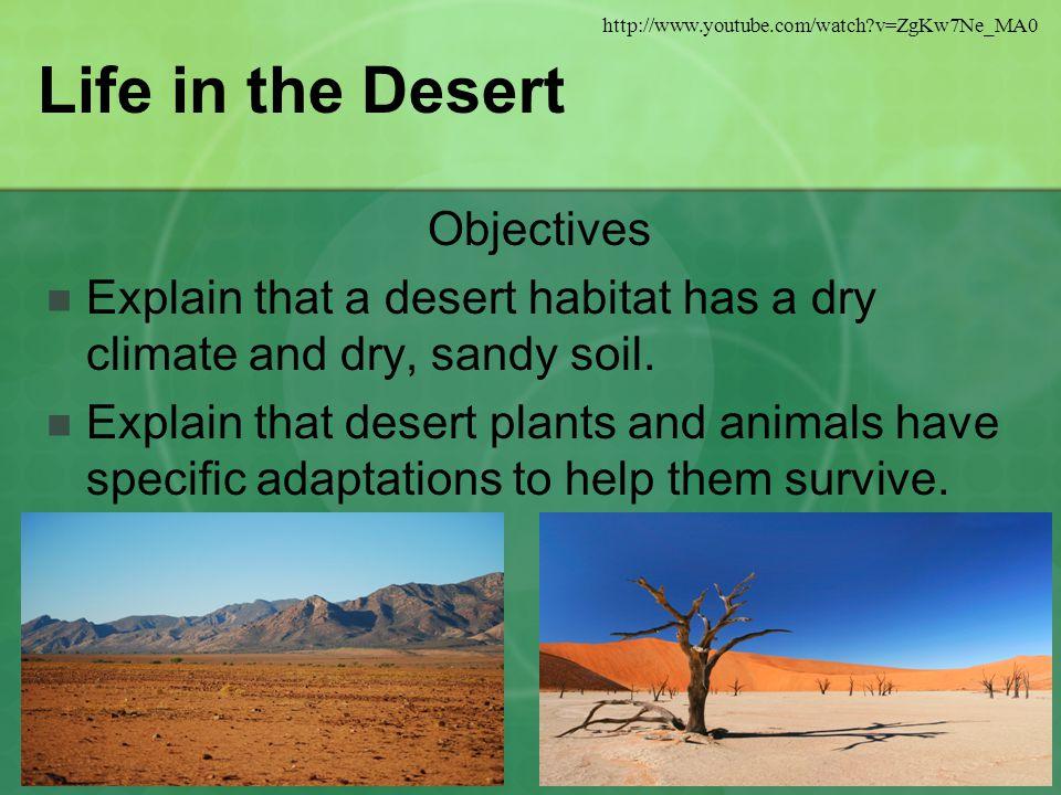 Life in the Desert Objectives Explain that a desert habitat has a dry climate and dry, sandy soil.