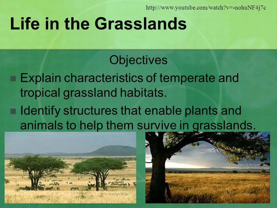 Life in the Grasslands Objectives Explain characteristics of temperate and tropical grassland habitats.