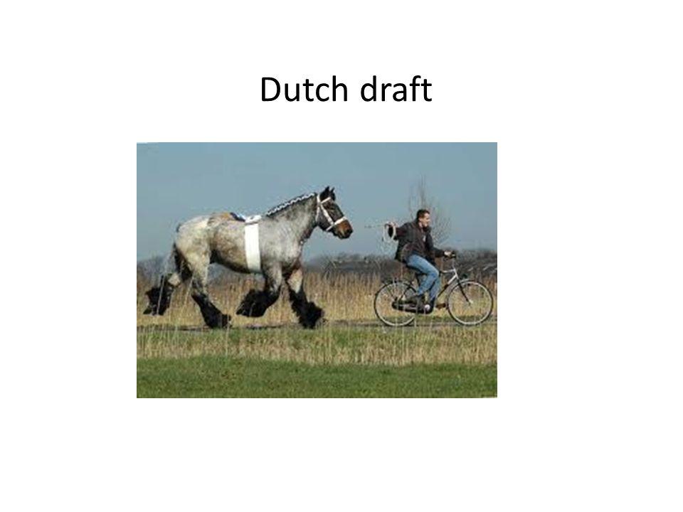 Dutch draft