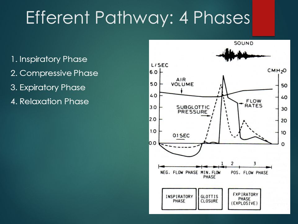 Efferent Pathway: 4 Phases 1. Inspiratory Phase 2.