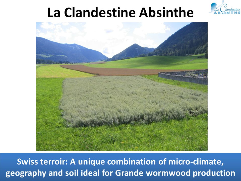Swiss terroir: A unique combination of micro-climate, geography and soil ideal for Grande wormwood production La Clandestine Absinthe