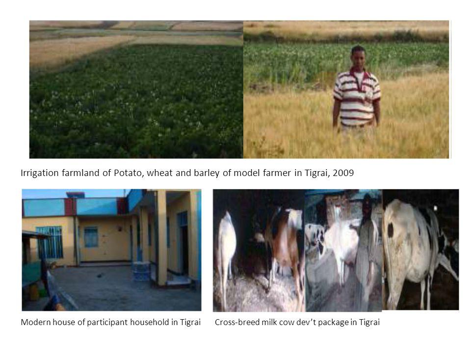 Irrigation farmland of Potato, wheat and barley of model farmer in Tigrai, 2009 Modern house of participant household in Tigrai Cross-breed milk cow d