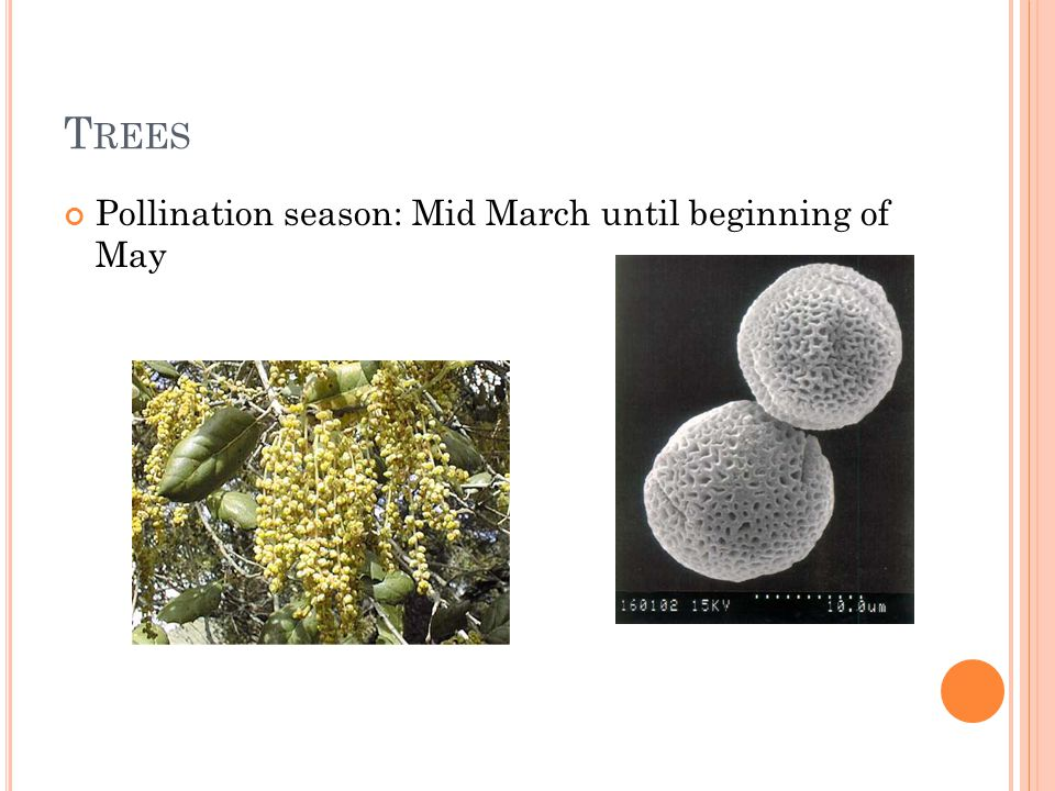 T REES Pollination season: Mid March until beginning of May