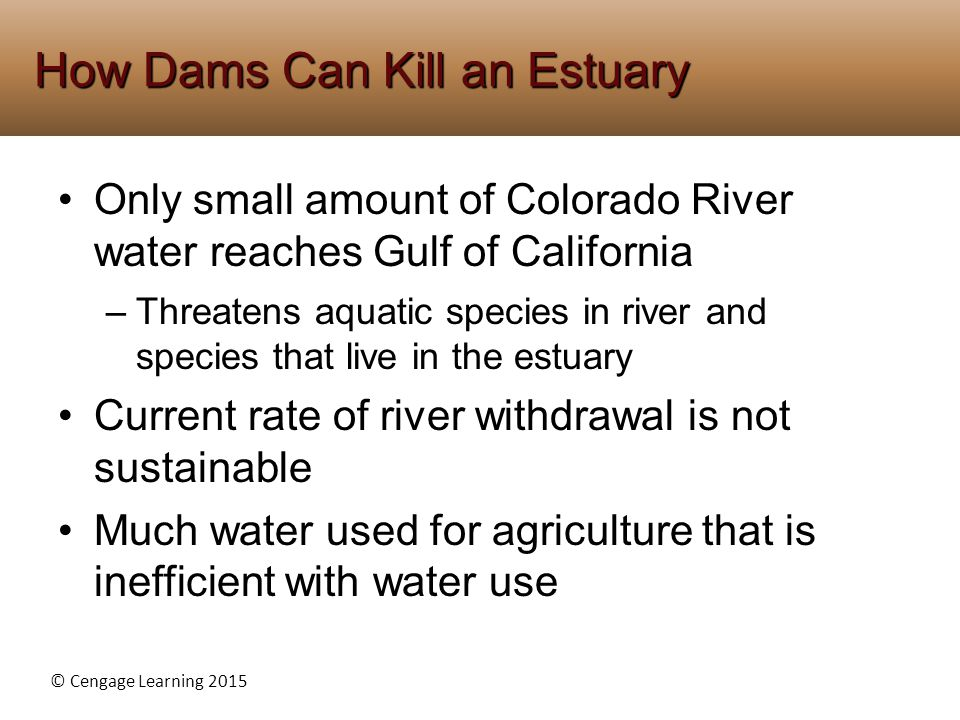 © Cengage Learning 2015 Only small amount of Colorado River water reaches Gulf of California –Threatens aquatic species in river and species that live in the estuary Current rate of river withdrawal is not sustainable Much water used for agriculture that is inefficient with water use How Dams Can Kill an Estuary