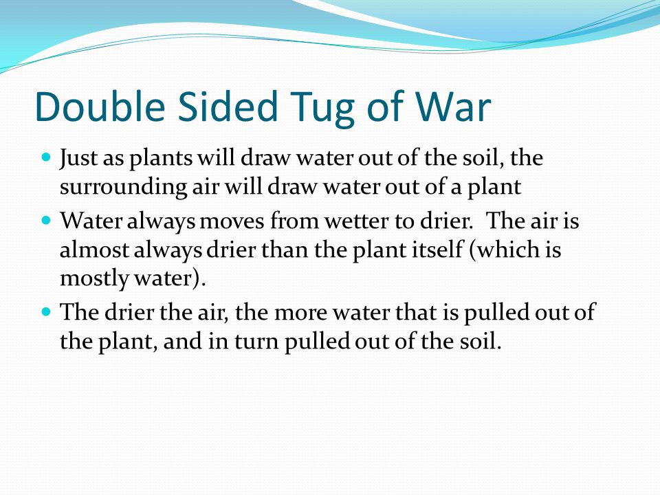 Double Sided Tug of War Just as plants will draw water out of the soil, the surrounding air will draw water out of a plant Water always moves from wetter to drier.