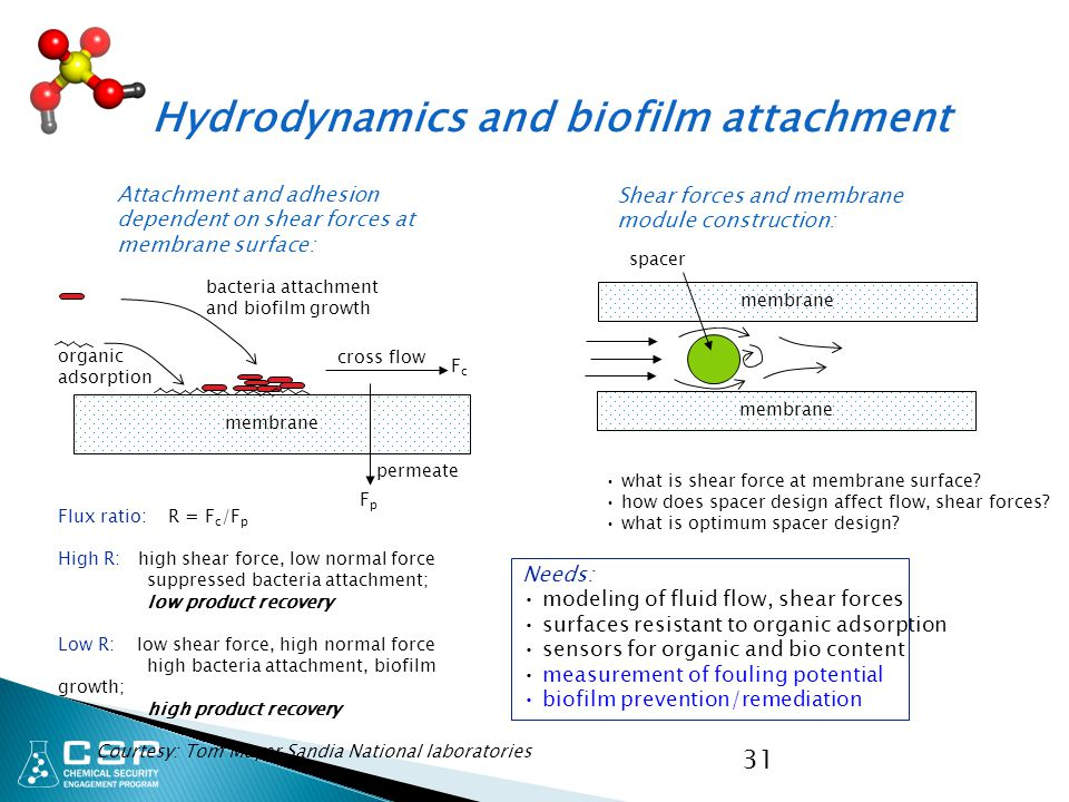 31 Hydrodynamics and biofilm attachment Attachment and adhesion dependent on shear forces at membrane surface: Shear forces and membrane module constr