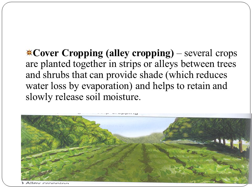Cover Cropping (alley cropping) – several crops are planted together in strips or alleys between trees and shrubs that can provide shade (which reduces water loss by evaporation) and helps to retain and slowly release soil moisture.