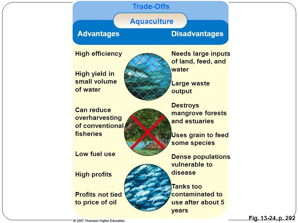 Fig. 13-24, p. 292 Trade-Offs Aquaculture AdvantagesDisadvantages High efficiencyNeeds large inputs of land, feed, and water High yield in small volum