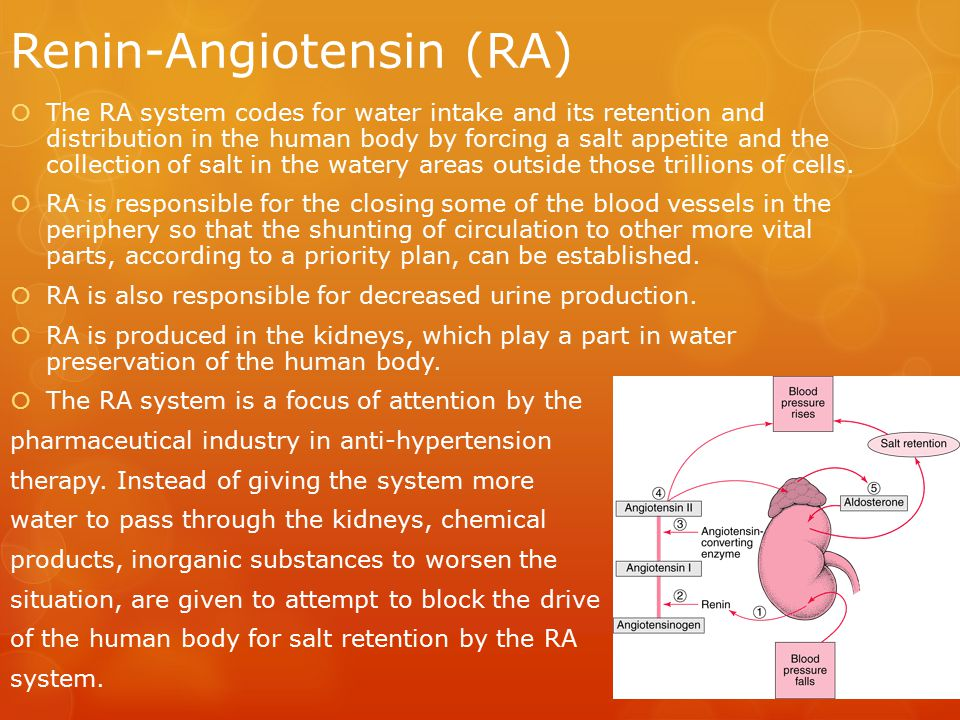 Renin-Angiotensin (RA)  The RA system codes for water intake and its retention and distribution in the human body by forcing a salt appetite and the