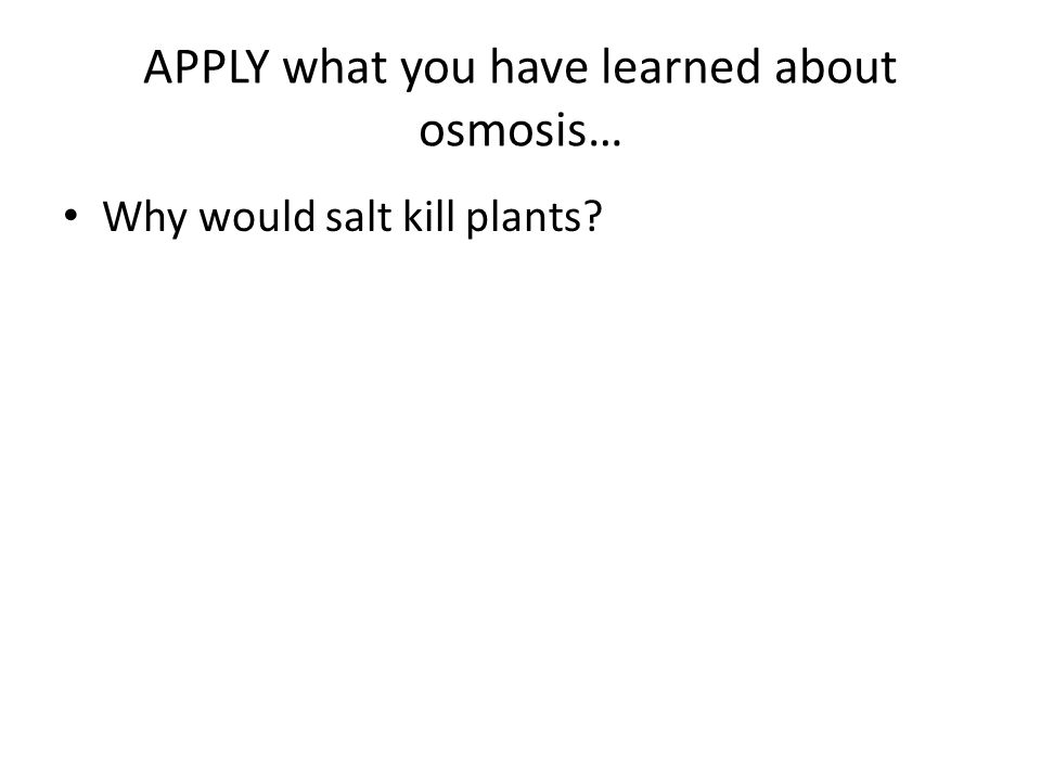 APPLY what you have learned about osmosis… Why would salt kill plants?