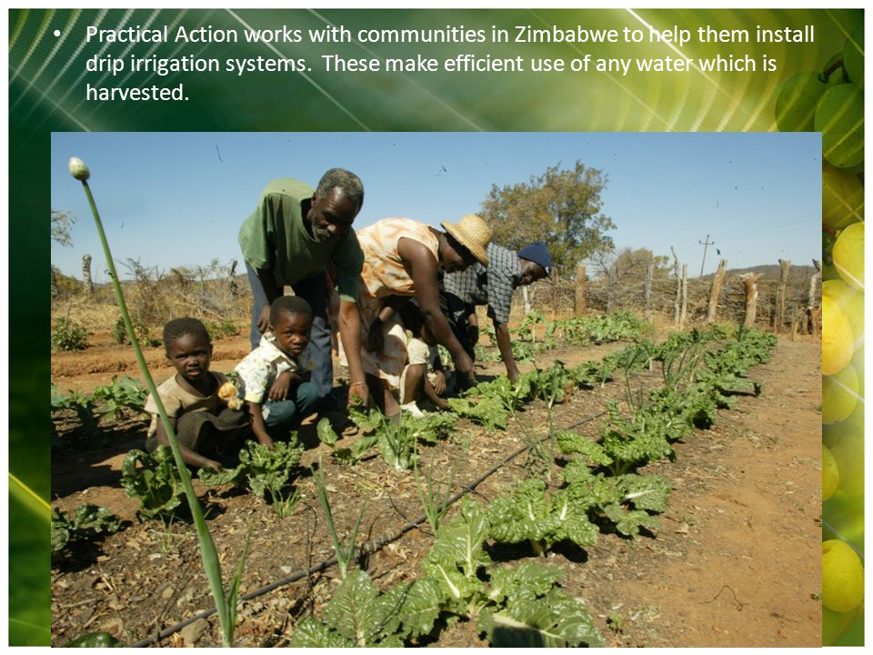 Practical Action works with communities in Zimbabwe to help them install drip irrigation systems. These make efficient use of any water which is harve