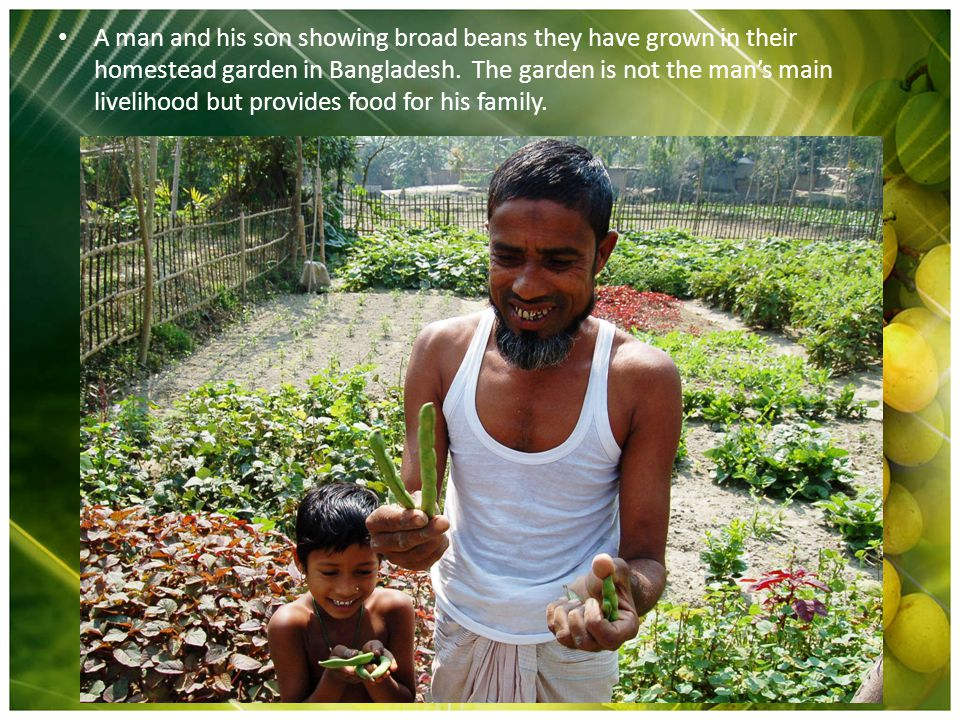 A man and his son showing broad beans they have grown in their homestead garden in Bangladesh. The garden is not the man's main livelihood but provide