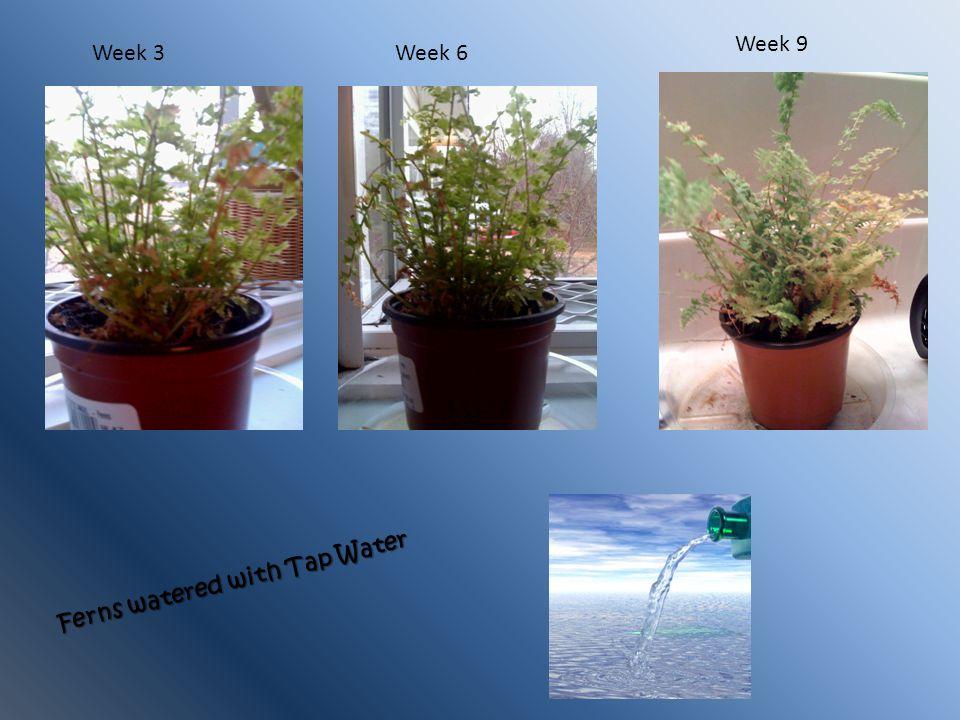Week 3Week 6 Week 9 Ferns watered with Tap Water