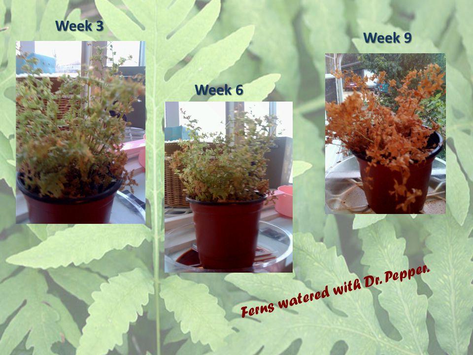 Week 3 Week 6 Week 9 Ferns watered with Dr. Pepper.