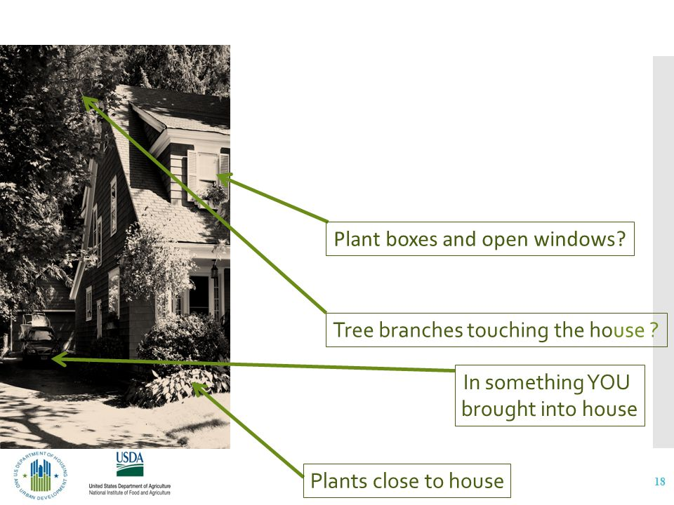 How did the ants get into your home? 18 Plant boxes and open windows? Tree branches touching the house ? Plants close to house In something YOU brough