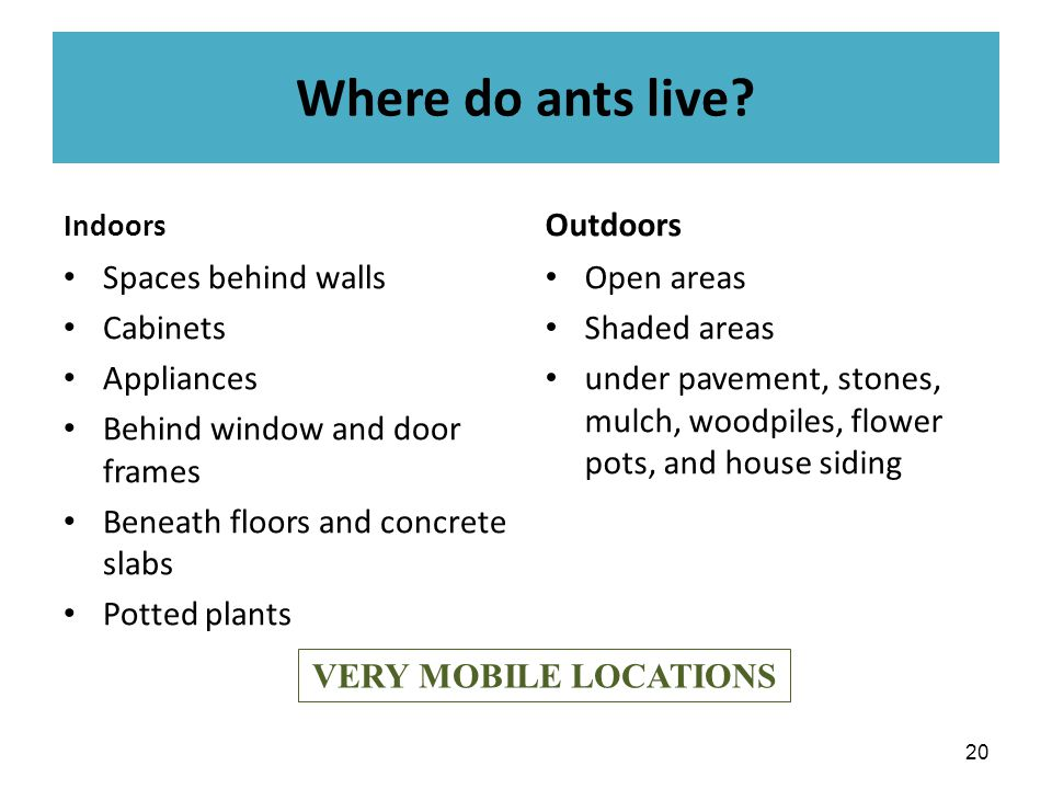 Where do ants live.