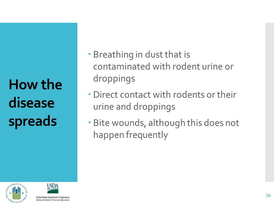 How the disease spreads  Breathing in dust that is contaminated with rodent urine or droppings  Direct contact with rodents or their urine and droppings  Bite wounds, although this does not happen frequently 26