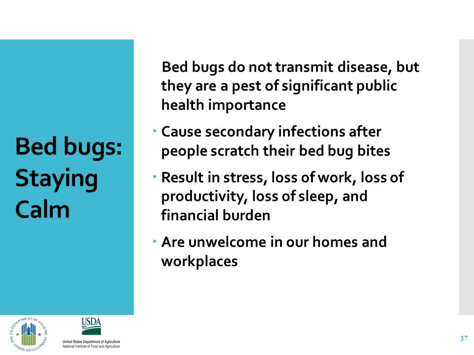 Bed bugs: Staying Calm Bed bugs do not transmit disease, but they are a pest of significant public health importance  Cause secondary infections after people scratch their bed bug bites  Result in stress, loss of work, loss of productivity, loss of sleep, and financial burden  Are unwelcome in our homes and workplaces 37