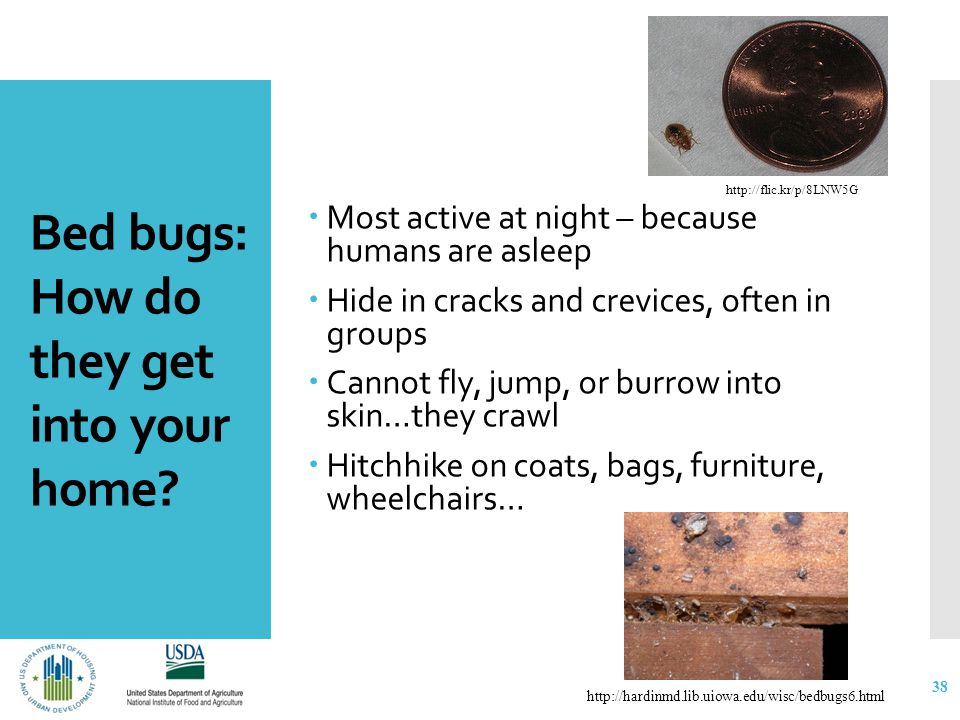 Bed bugs: How do they get into your home? 38  Most active at night – because humans are asleep  Hide in cracks and crevices, often in groups  Canno