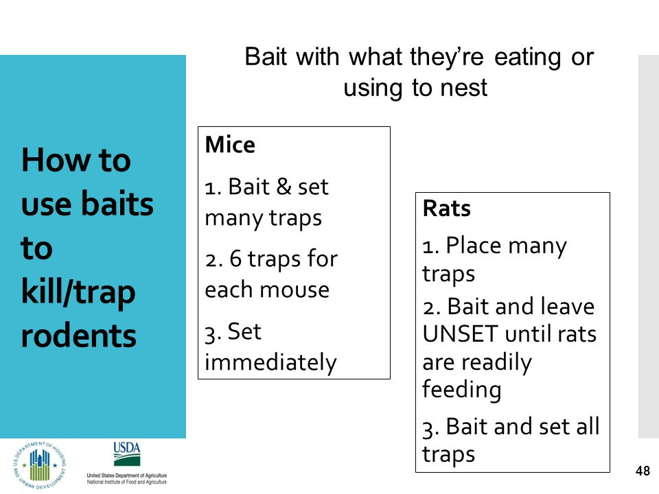 How to use baits to kill/trap rodents Mice 1. Bait & set many traps 2.