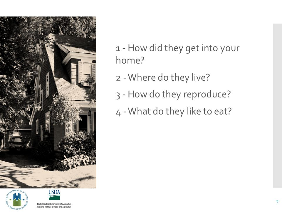 What do you know about the pests you have in your home? 1 - How did they get into your home? 2 - Where do they live? 3 - How do they reproduce? 4 - Wh