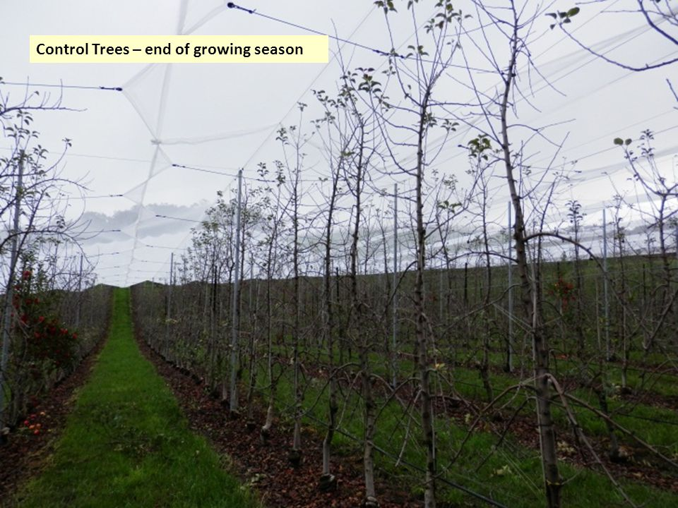 Control Trees – end of growing season