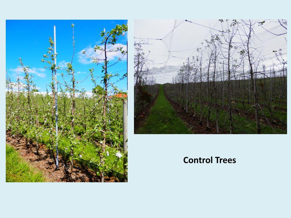 Control Trees